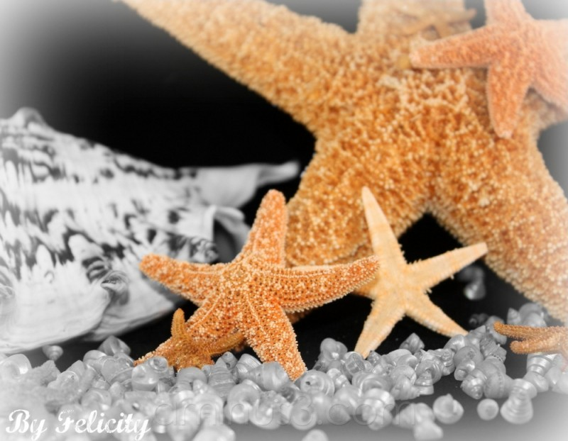 Mama Starfish and her charges