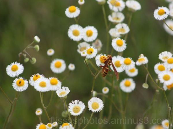 Just buzzing around...