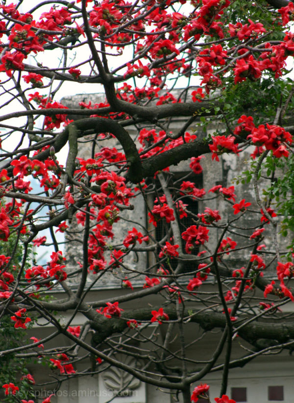 Red Flowers in China