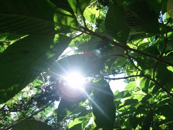 rainforest sun