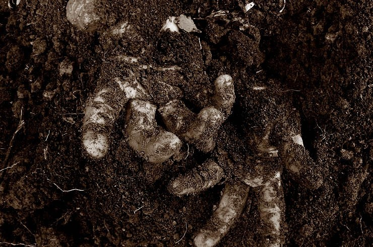 hand, hands, sepia, dead, death
