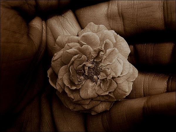 sepia, hand, flower, die