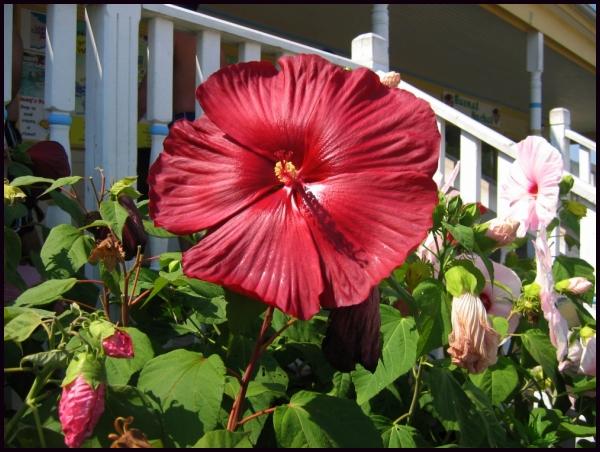 Beautiful Large Flowers