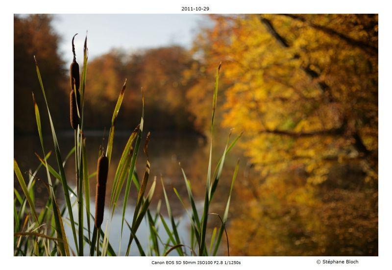 L'automne met le feu au lac