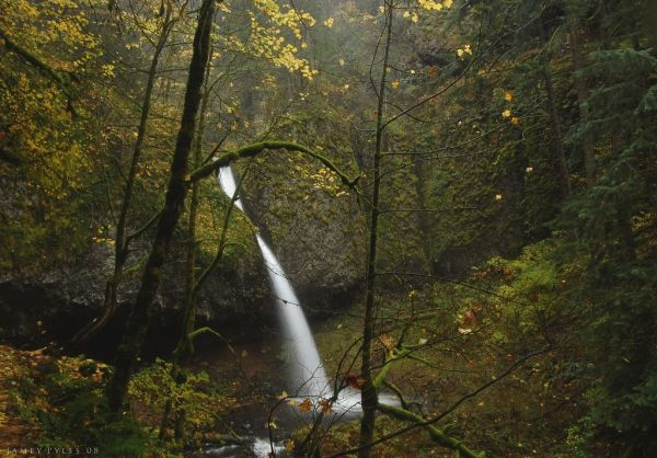 Ponytail falls in autumn, November 2008