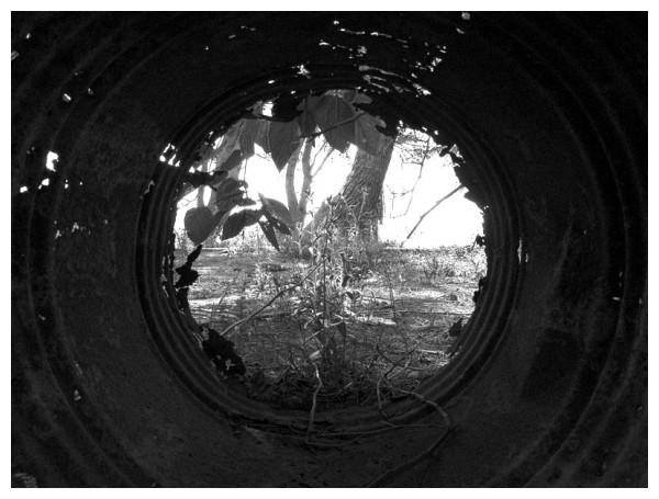 La luz a final del túnel