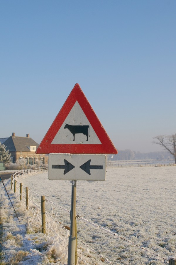Holland, sign of cow