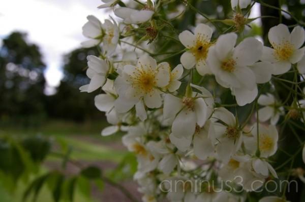 Kew Garden#5