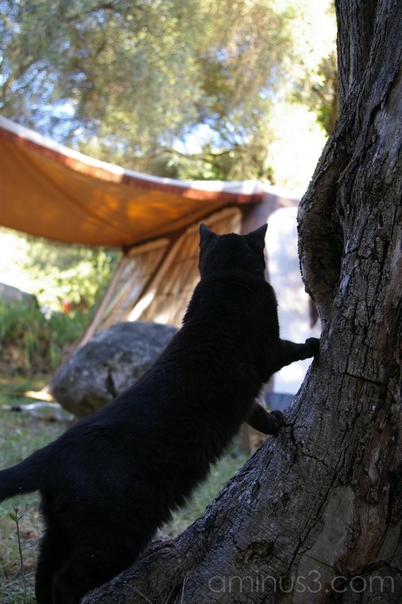 France  Holiday Summer Cat