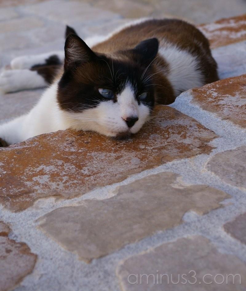 Cat#4
