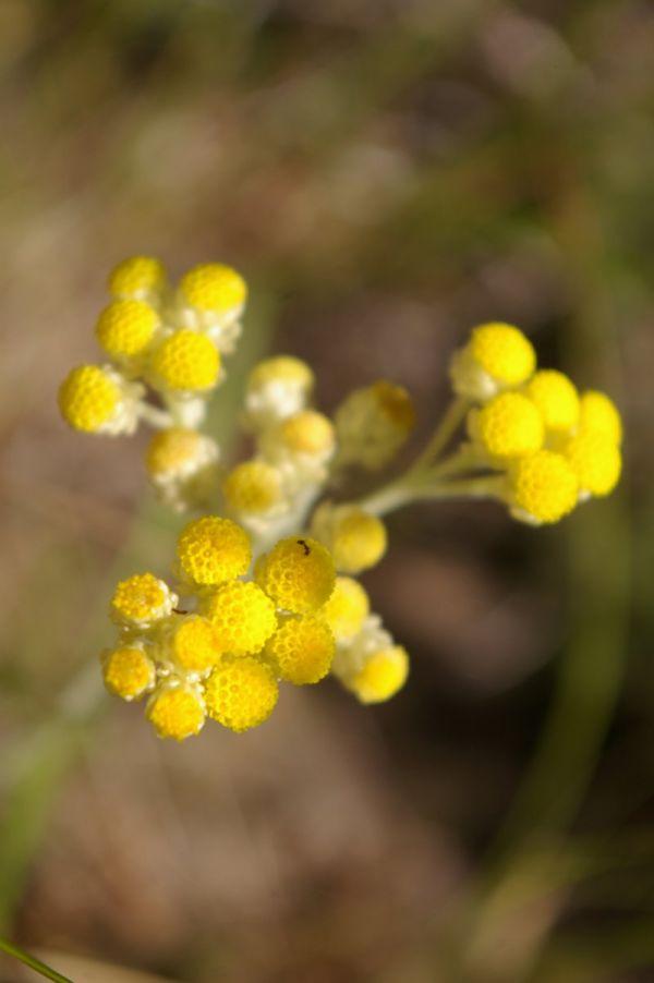 wild flower2