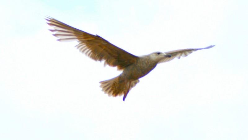 Freeflying bird
