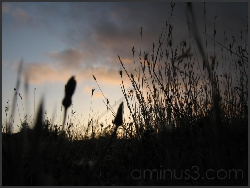 Looking at the sunset from the grass.