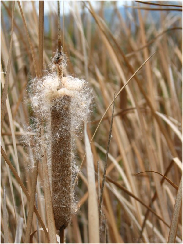 Fuzzy Reeds