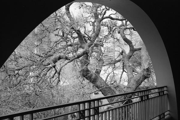 Bridge Steps view