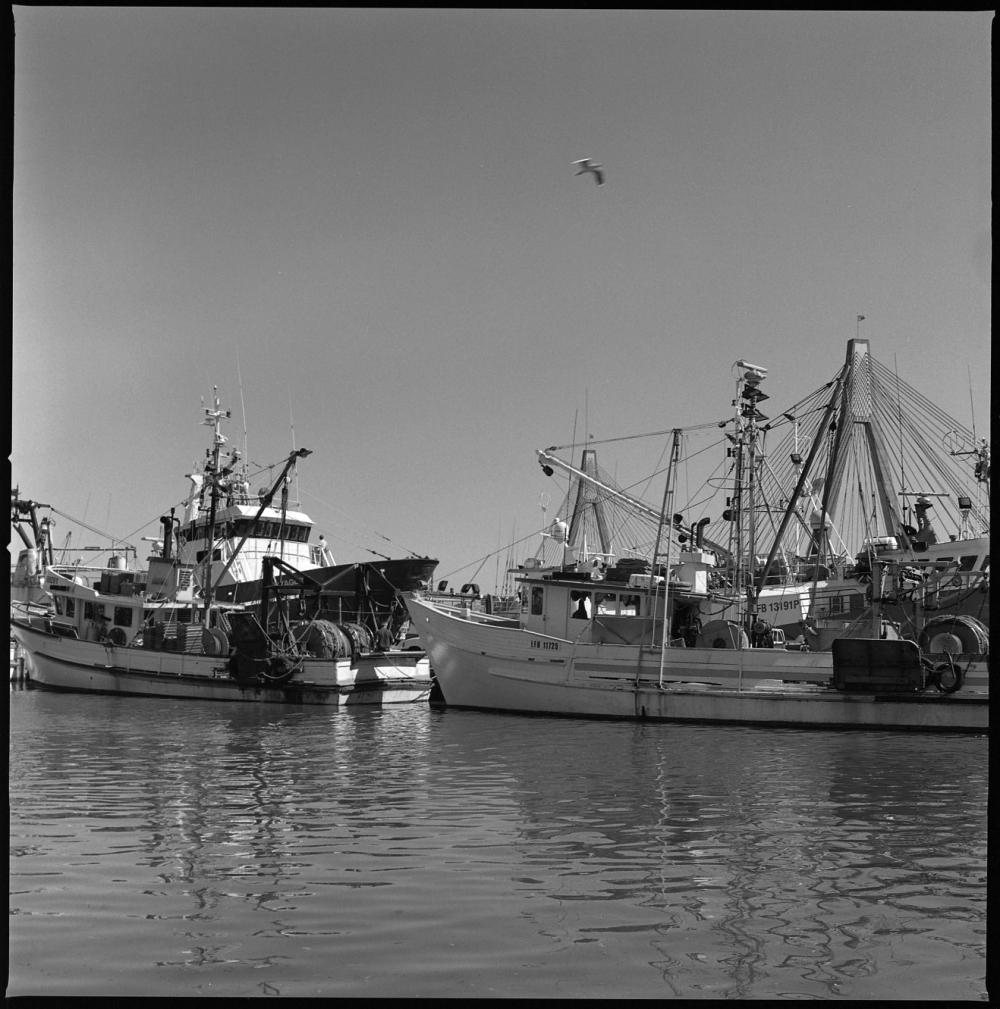 fishing markets