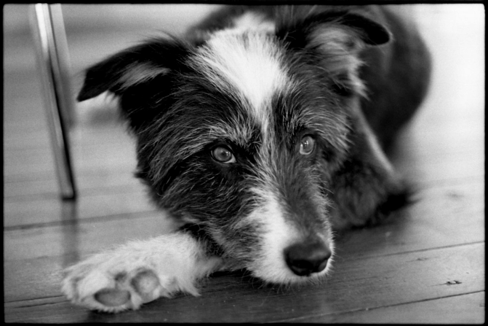 RIP - Rudy