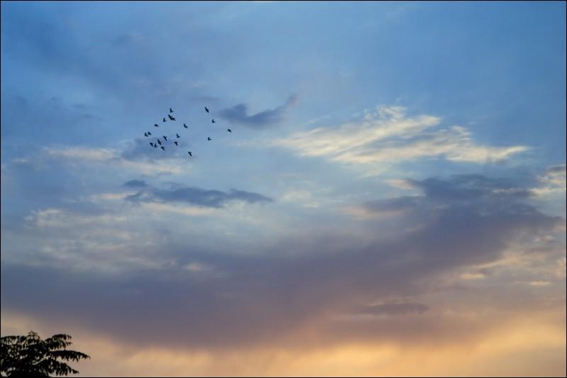 sunset sky birds fly