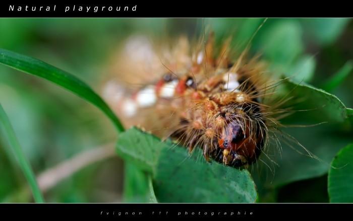 Natural playground IV