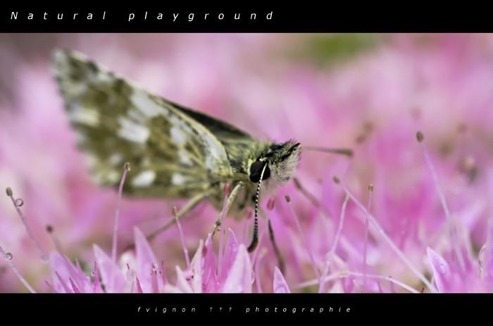 Natural playground V