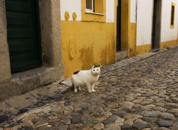 Kitty of Évora