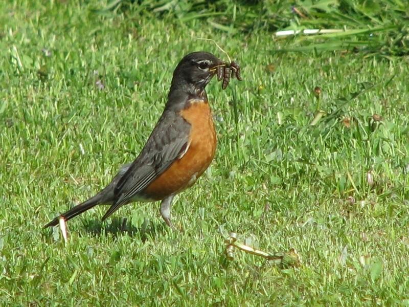 Un oiseau qui a des vers