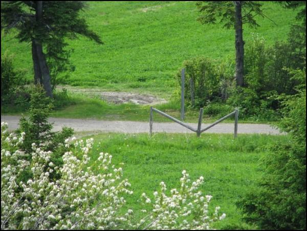 Chemin dans la nature