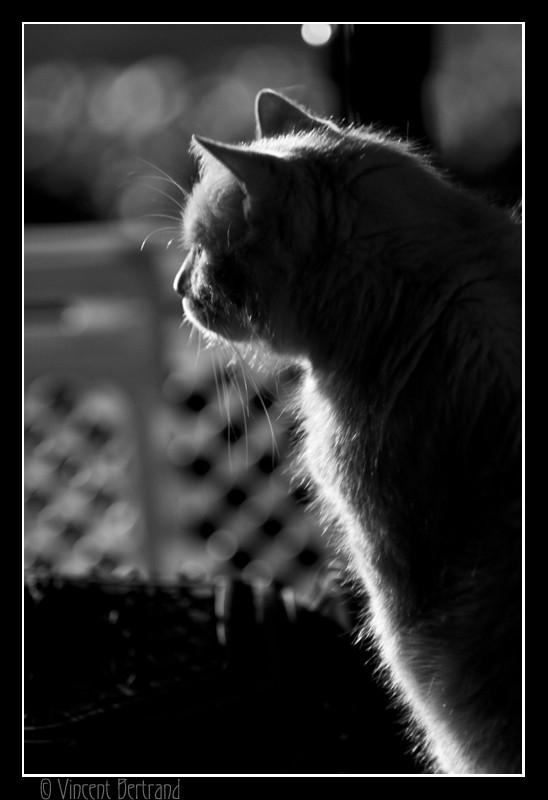 La nuit, tous les chats sont gris!