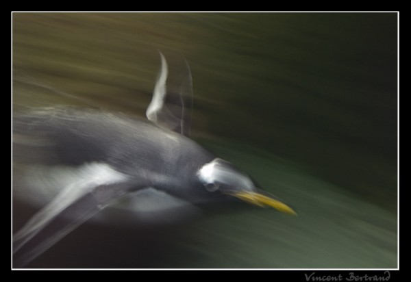 Comme un poisson... ~ oiseaux 1