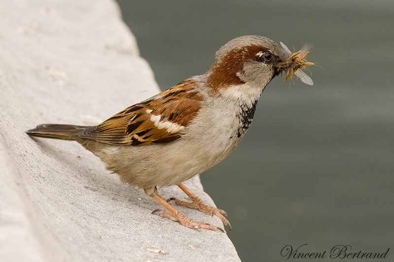 Gourmand ~ oiseaux 4
