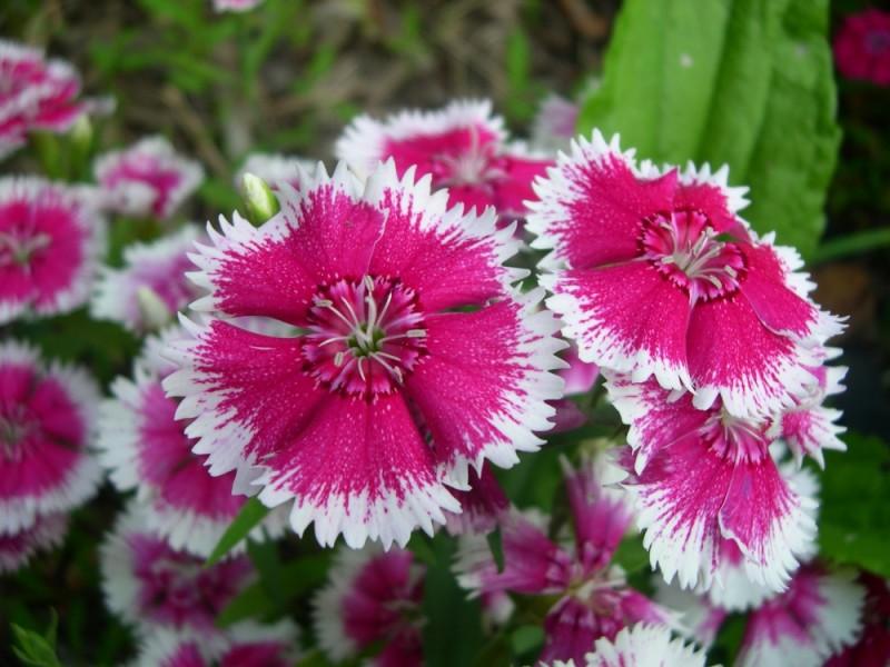 Un bouquet des fleurs, mon amour ?