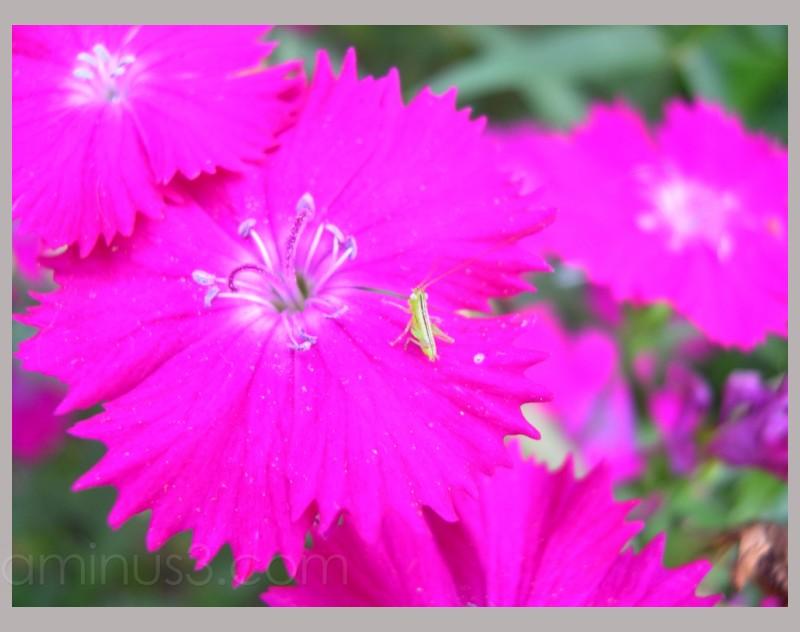 Mini Grasshopper!