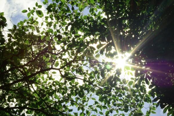 Soleil sous les arbres