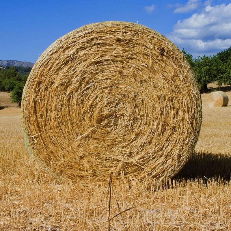 Rural, paja