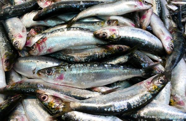 Unas sardinas (Mercado X)