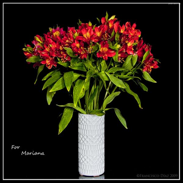 For Mariana