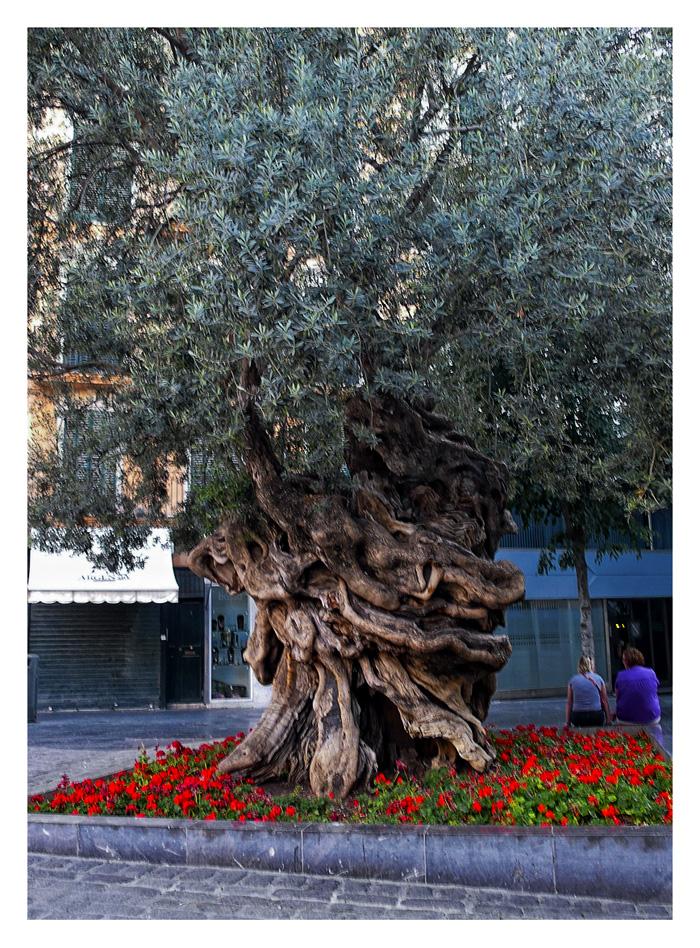 Conversación bajo el viejo olivo