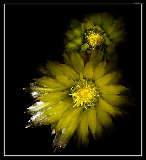 Unas flores amarillas