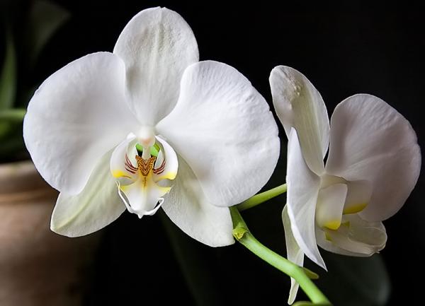Unas orquídeas