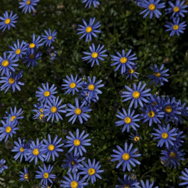 Unas flores para el domingo.