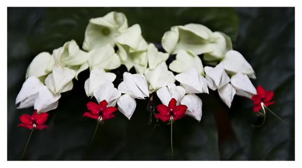 Cuatro flores