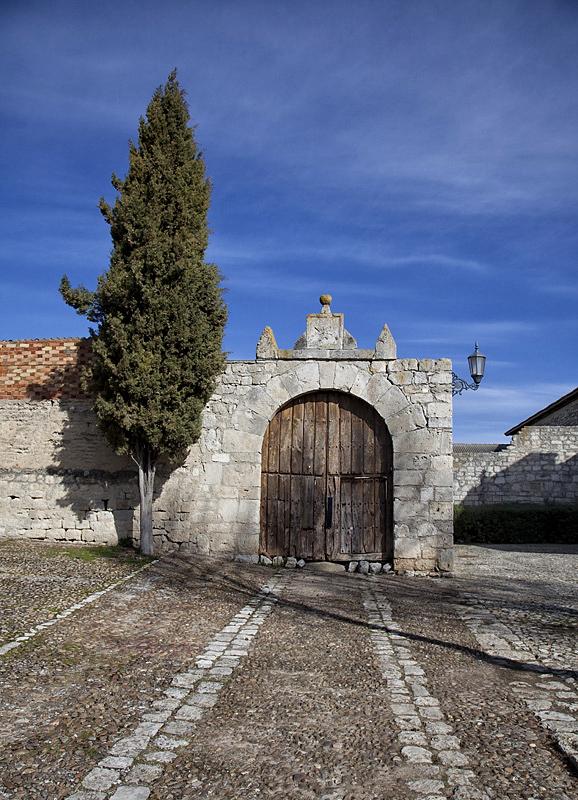 Ciprés y muro