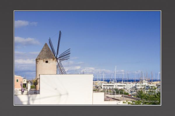 Molinos de Mallorca