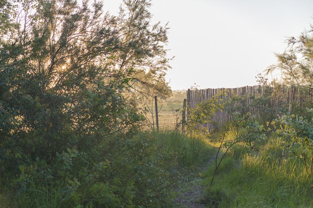 Albufera de Alcudia
