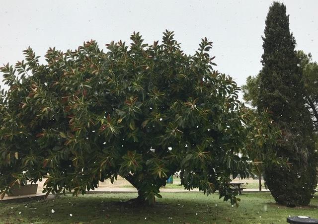 Empieza a nevar