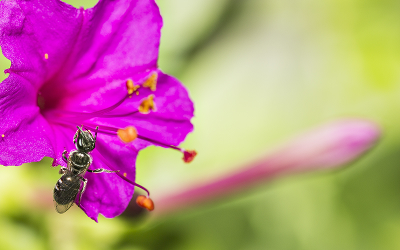Periquito con insecto