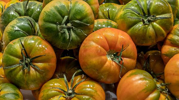 Tomates RAF
