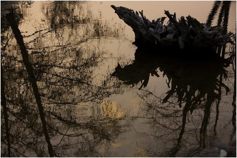 Reflection of Stump on American River, Sacramento