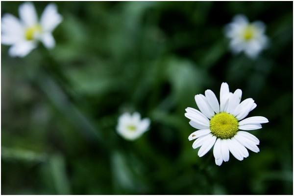 Single flower in Grass bed