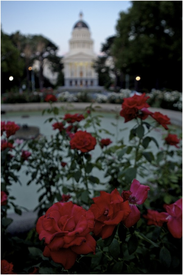 Flowers Capitol Building California Sacramento
